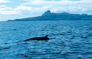 Eigg and Minke Whale