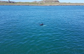Iona and a dolphin by Neil White